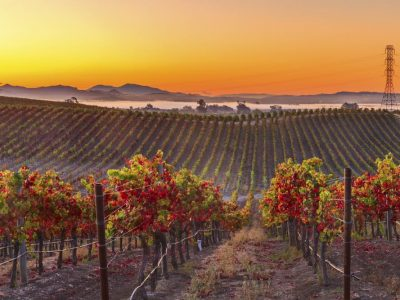 Napa Valley Things To Do