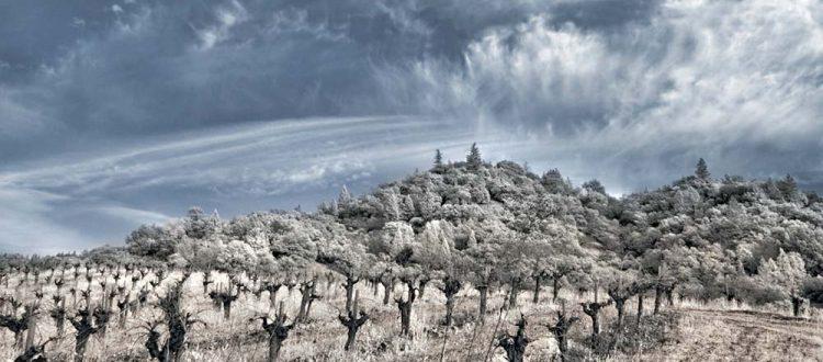 napa valley winter