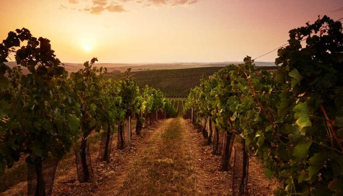 The Art of the Wine Country Tour